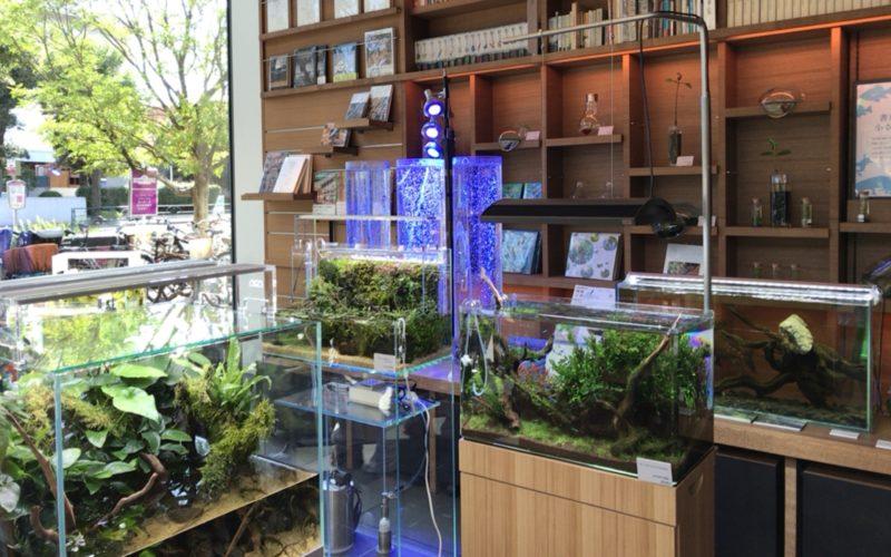 代官山蔦屋書店1号館1Fのブックフロアで開催したイベント「書店の中の小さい水族館」の会場内