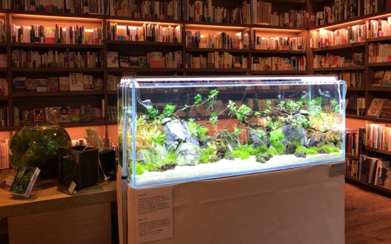 書店の中の小さい水族館で代官山蔦屋書店1号館1Fのブックフロアに展示していたアクアリウム