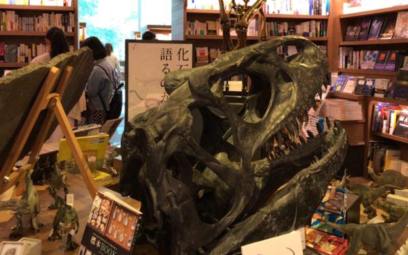 代官山蔦屋書店1号館1Fで開催した化石は何を語るのかに展示していた恐竜の頭骨
