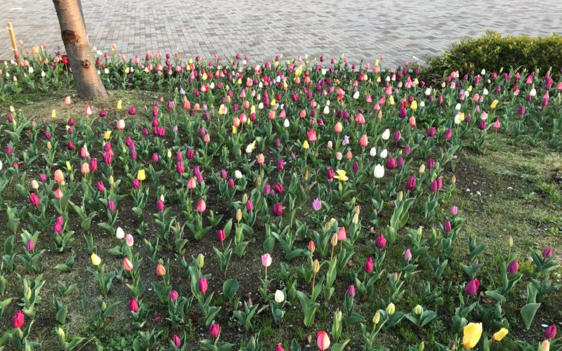 シンボルプロムナード公園のセントラル広場で開催したイベント「臨海副都心チューリップフェスティバル」の会場内