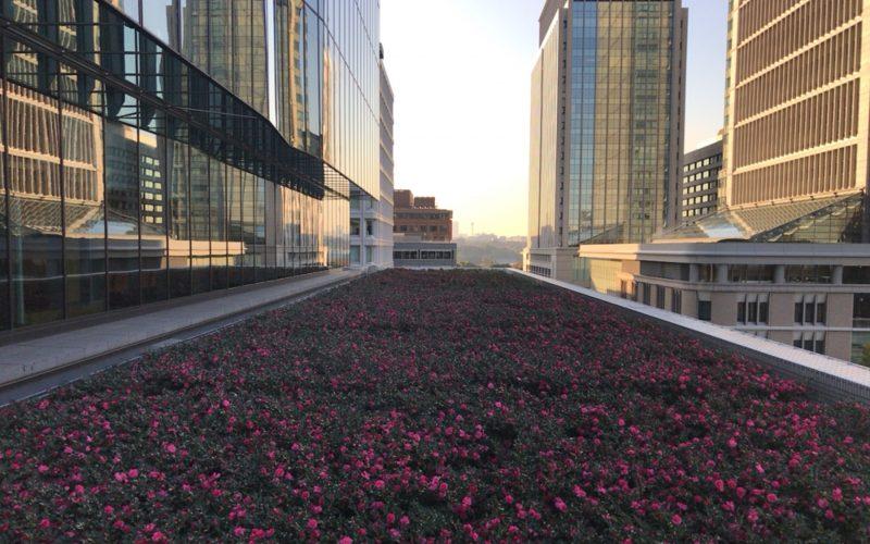 屋上庭園 KITTEガーデンにある花だん