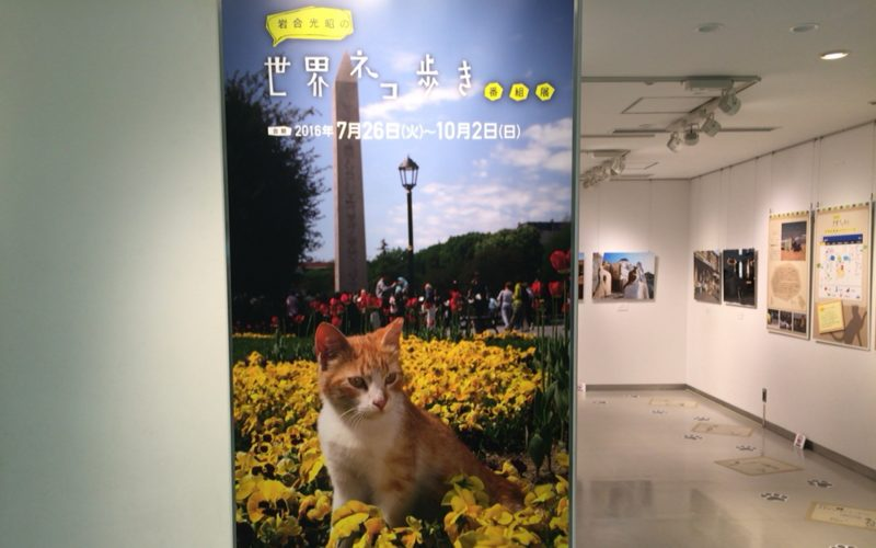 NHKスタジオパークのスタジオギャラリーで開催した「岩合光昭の世界ネコ歩き」番組展の入口