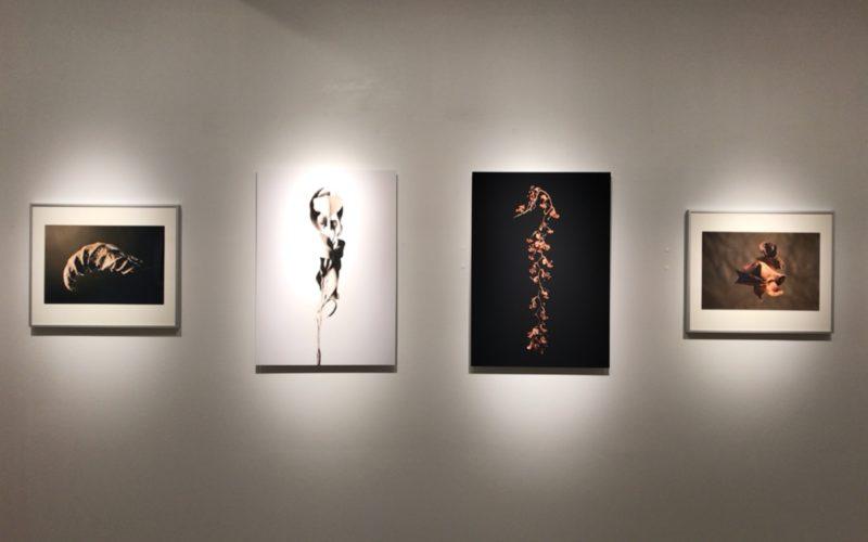 銀座プレイス 6Fのソニーイメージングギャラリーで開催された長谷康平 作品展 pictorial Sの展示作品