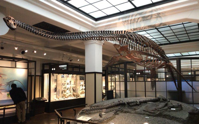 国立科学博物館の日本館3F北に展示しているフタバスズキリュウの復元骨格