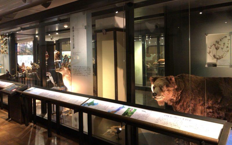 国立科学博物館の日本館2F南の「生き物たちの日本列島」の展示