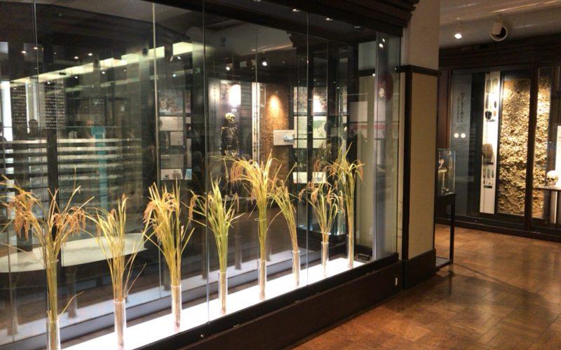 国立科学博物館の日本館2F北の「日本人と自然」の展示