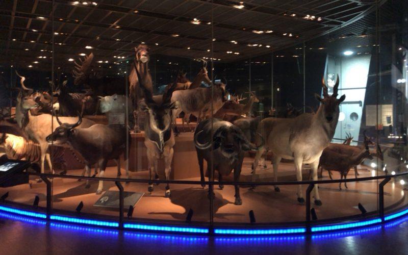 国立科学博物館の地球館3Fに展示している大型動物のはく製群