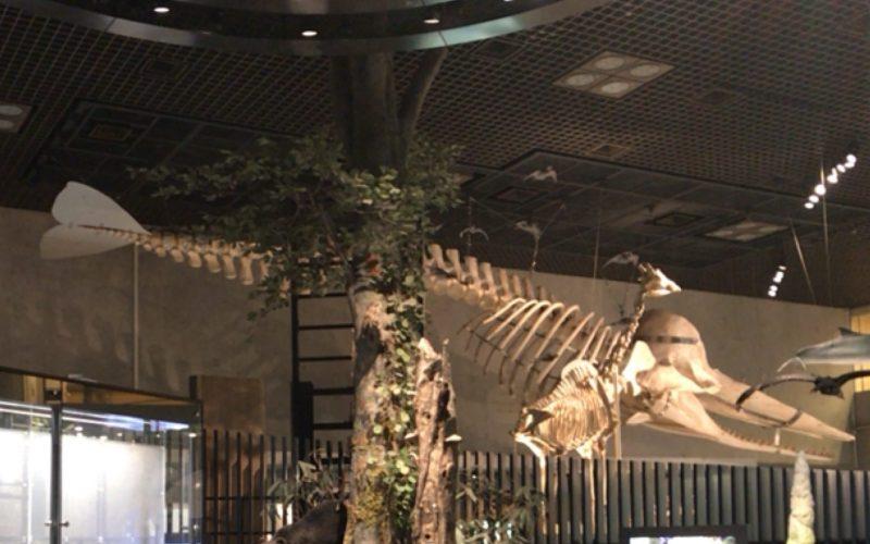 国立科学博物館の地球館1Fの天井からつり下がるマッコウクジラの全身骨格