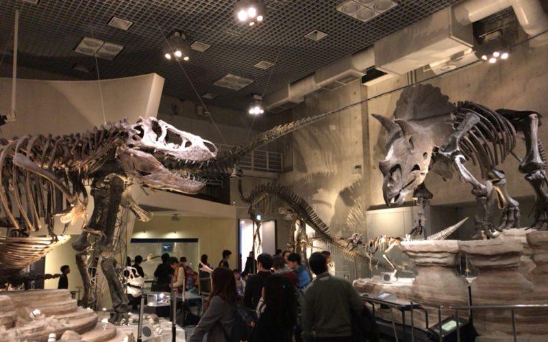 国立科学博物館の地球館B1Fに向かいあって展示している恐竜の骨格