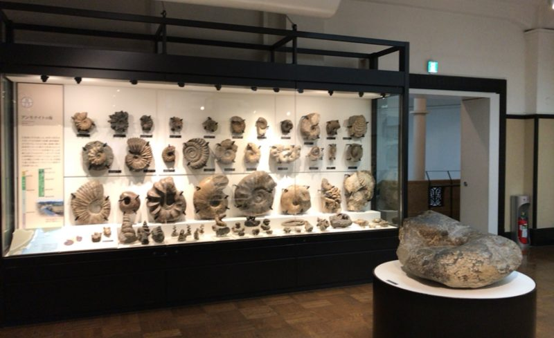 国立科学博物館の日本館3F北にあるアンモナイトの化石コレクション