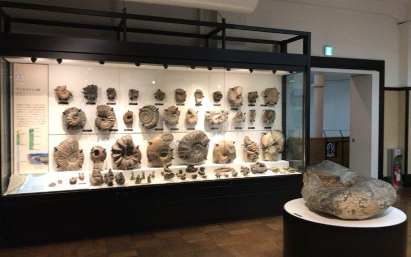 国立科学博物館の日本館3F北に展示しているアンモナイトの化石コレクション