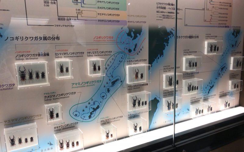 国立科学博物館の日本館2Fに展示しているクワガタのコーナー