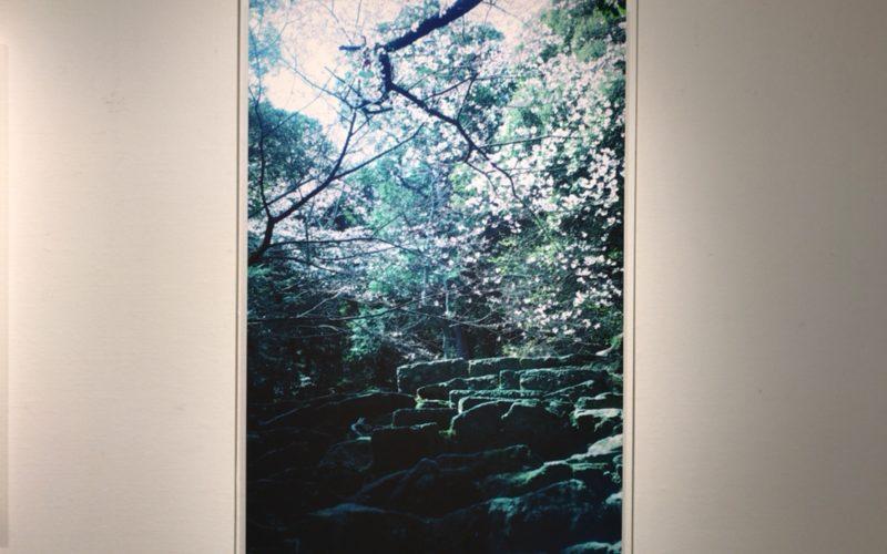 銀座プレイス6Fのソニーイメージングギャラリーで開催した「山本まりこ 作品展 熊野古道を歩いています。」の展示作品