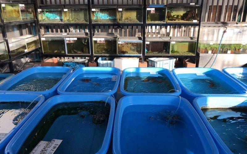 西武池袋の食と緑の空中庭園のフィッシュショップ内の水槽