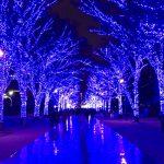代々木公園のケヤキ並木で開催した青の洞窟 SHIBUYAの会場内
