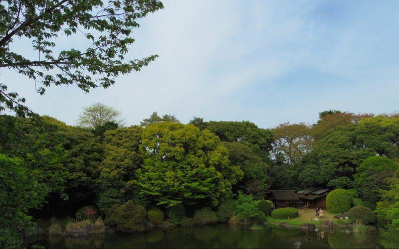 東京国立博物館の庭園と茶室