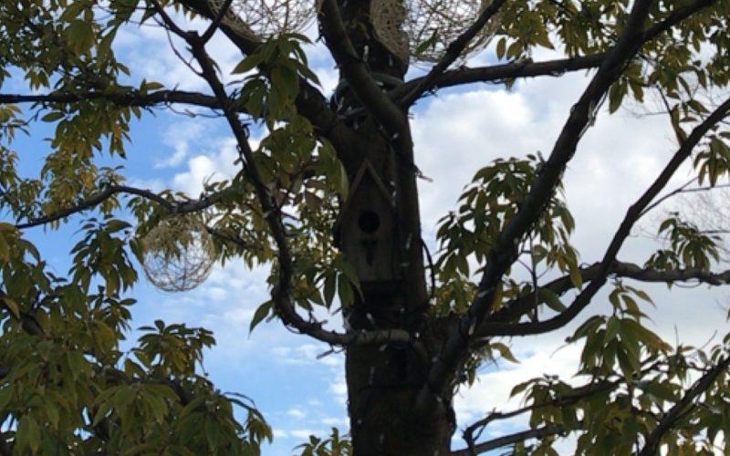 おもはらの森に設置している鳥の巣箱