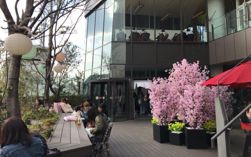 東急プラザ表参道原宿のイベント「OMOHARA SPRING」で屋上 おもはらの森に設置していた桜の木