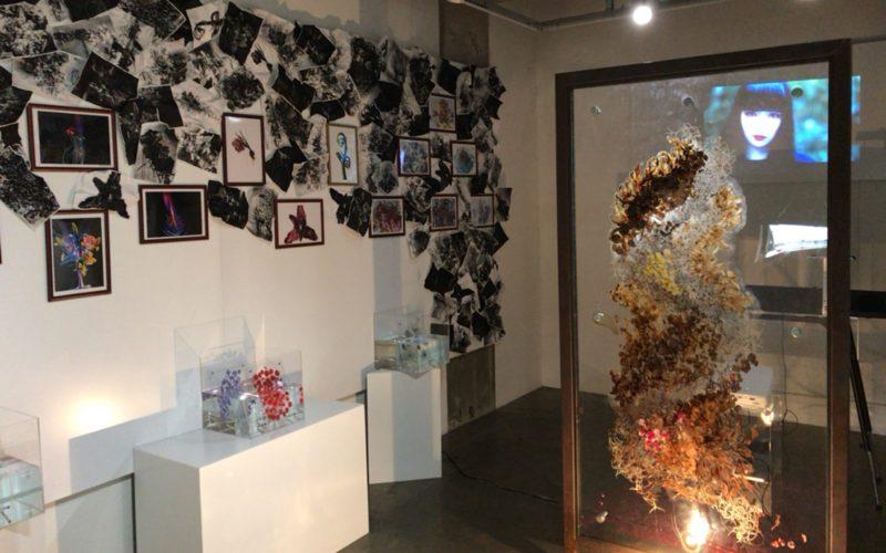 表参道ヒルズの表参道ROCKETで開催したPressed Flower Exhibition「無彩色の痛点」の会場内
