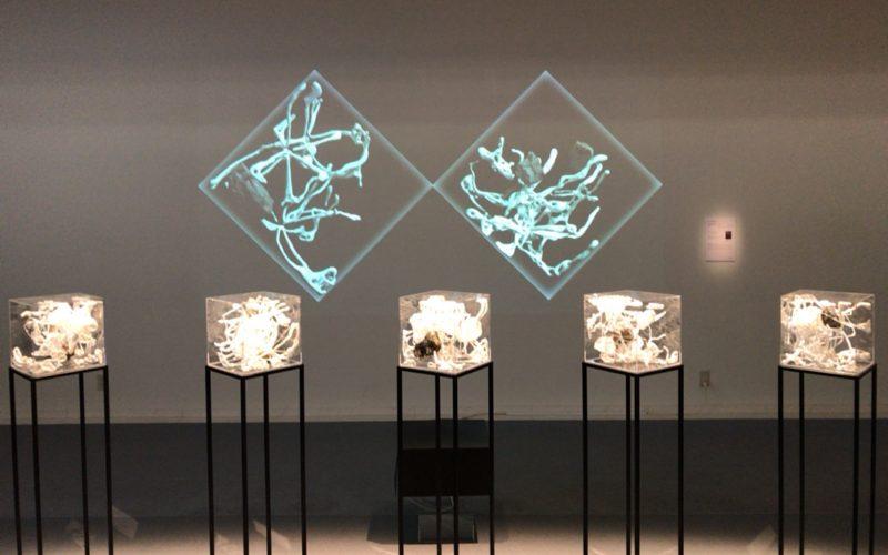 SICF17受賞者展でスパイラルガーデンに展示されたFUKUPOLYの作品