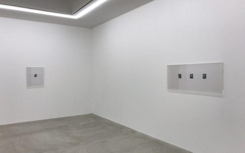 コンプレックス665の小山登美夫ギャラリーで開催した上田義彦「林檎の木」の会場内