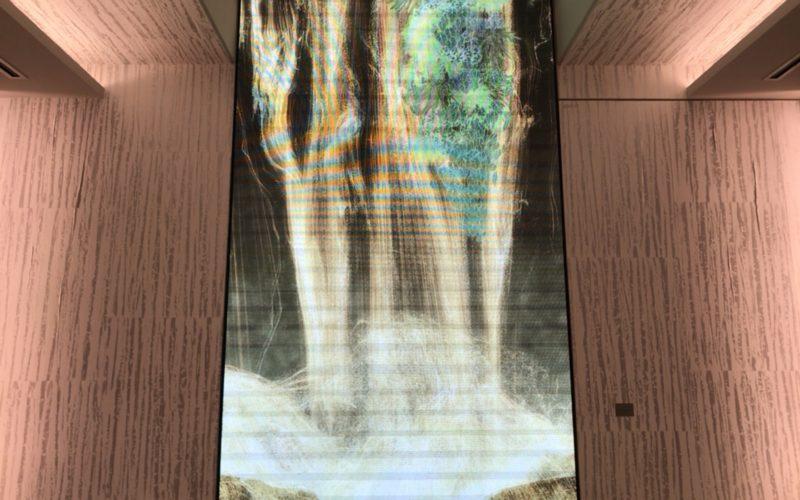 チームラボの作品「Universe of Water Particles on the Living Wall」のギンザシックス クリスマス特別演出