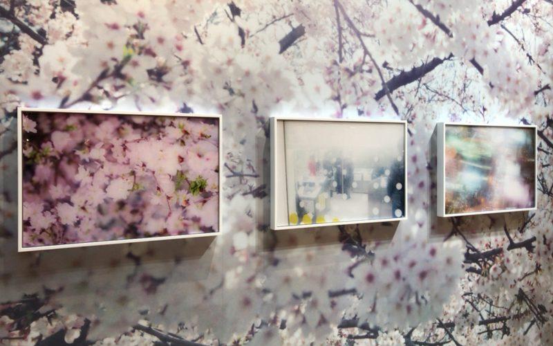 ギンザシックス6Fの銀座蔦屋書店で開催したSensible Garden 感覚の庭に展示していた蜷川実花さんの作品