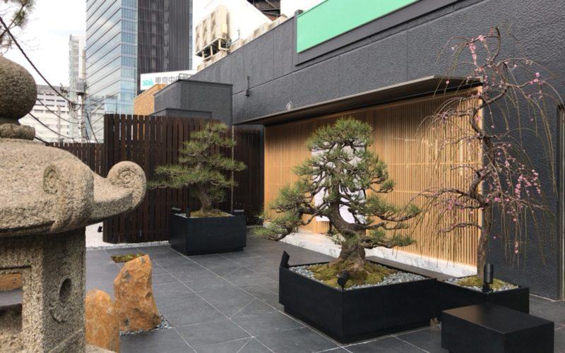 ラフォーレ原宿の源氏山テラスに植えられている梅や松
