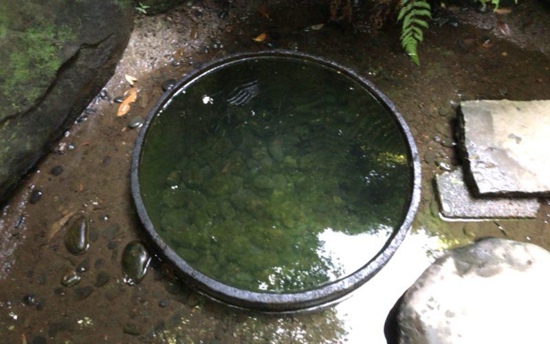 すこし濁って見える明治神宮の清正井