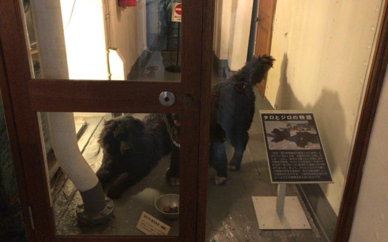 お台場船の科学館の南極観測船宗谷船内に展示しているタロとジロの剥製模型
