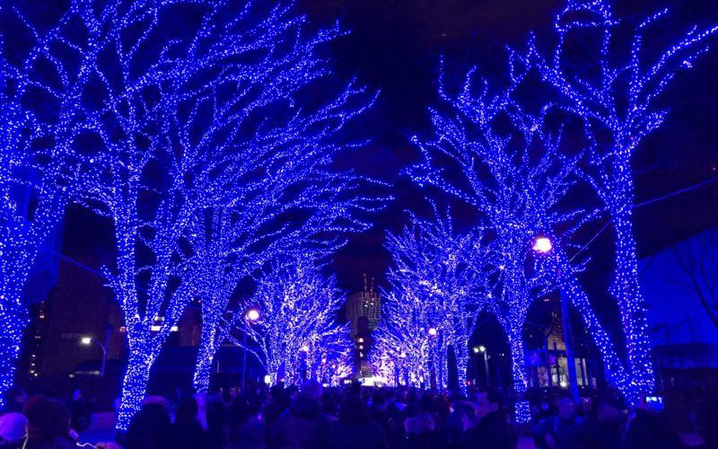 代々木公園イベント広場に向かうケヤキ並木に点灯した青の洞窟 SHIBUYAのイルミネーション