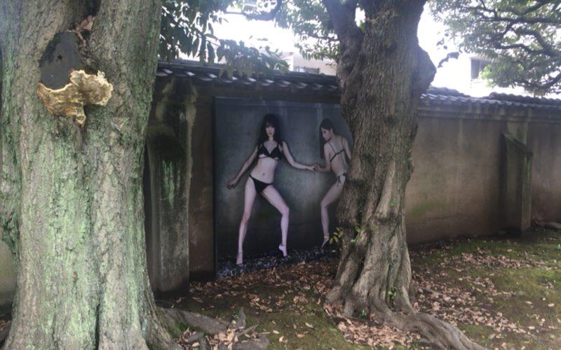 原美術館で開催した篠山紀信展 快楽の館の展示作品