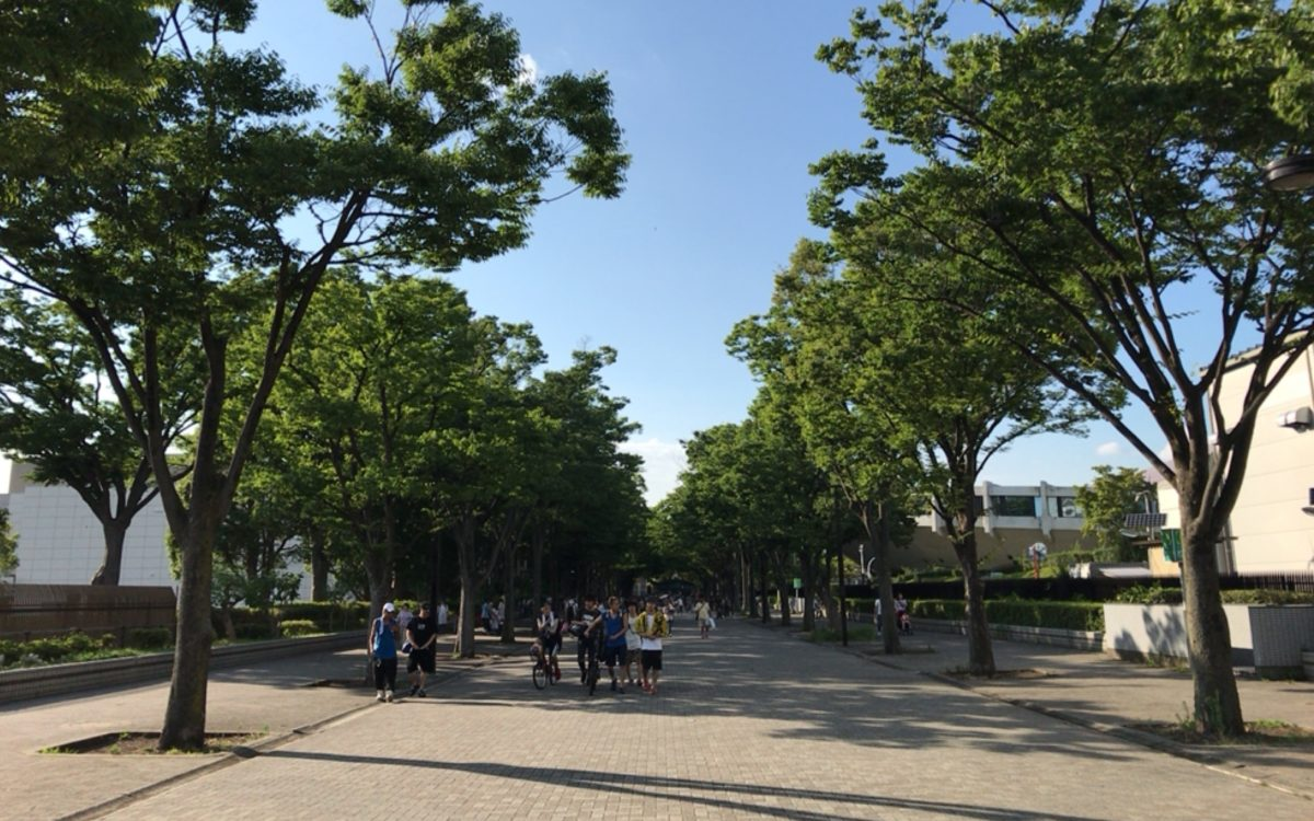 代々木公園のイベント広場に向かうケヤキ並木