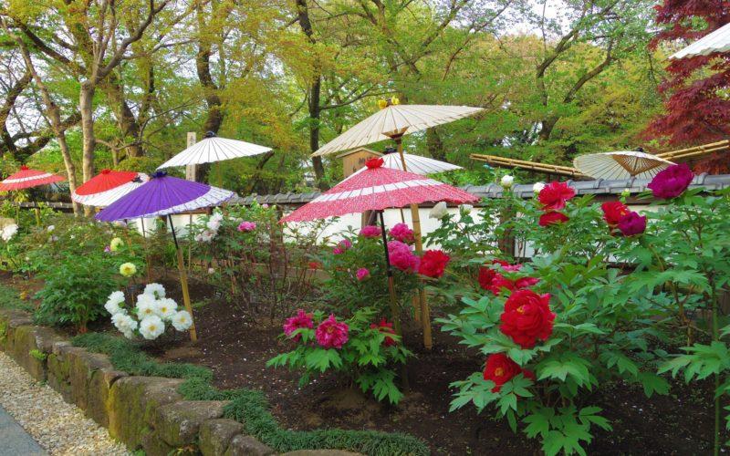 上野公園の上野東照宮ぼたん苑で開催したイベント「春のぼたん祭」の会場内