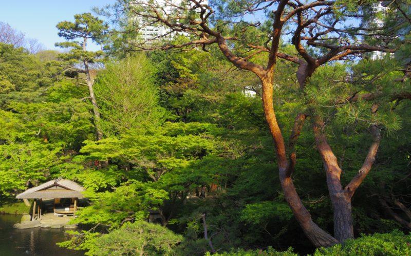 白金台 八芳園の日本庭園に設置されている水亭