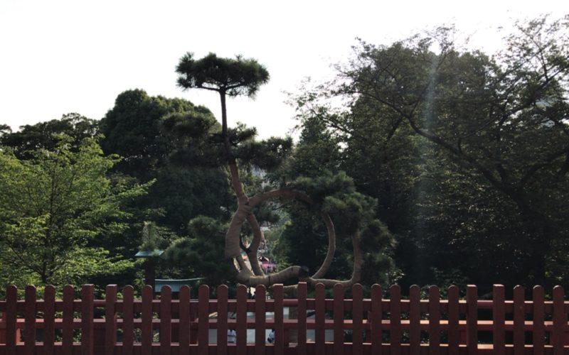 上野公園内にある清水観音堂の月の松
