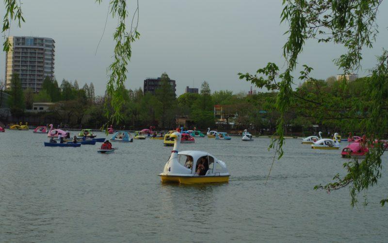 上野公園にある不忍池のスワンボート