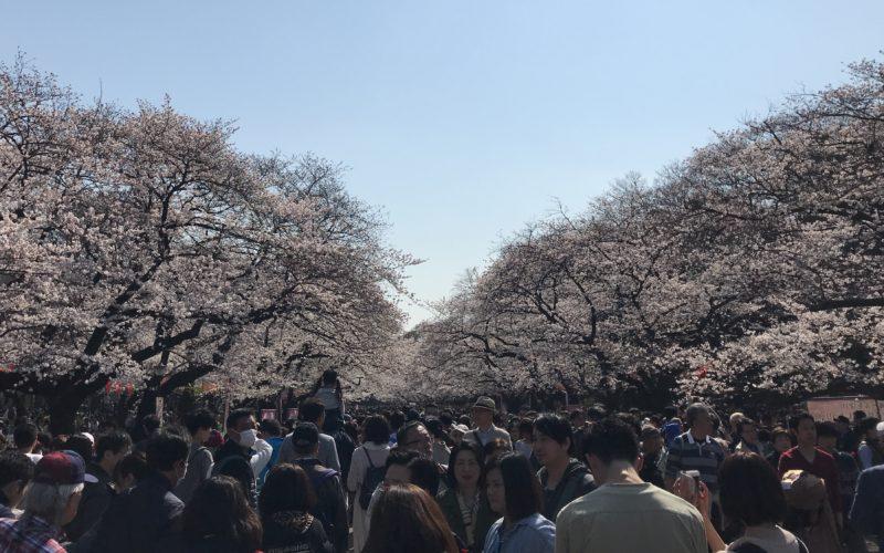 上野公園で開催したイベント「うえの桜フェスタ」の会場内