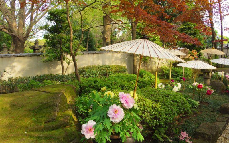 上野公園内にあるぼたん苑の苑内